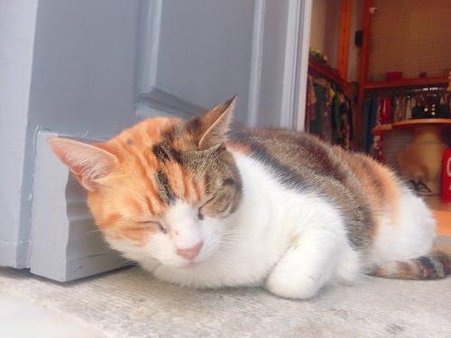【ギリシャ・ミコノス】やっぱり猫が好き!!『ミコノス島』は本当に猫天国だった!!