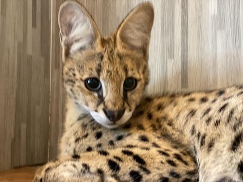 【タイ・バンコク】世界ふしぎ発見でも紹介された大人気動物カフェ 『The Animal Cafe Bangkok』