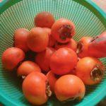 柿のスーパーパワー・二日酔いに効く・アンチエイジング効果も期待・やっぱり旬のモノには意味がある