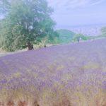 札幌から行けるラベンダー畑【北海道・札幌】の 【幌見峠ラベンダー園】さんをご紹介します。