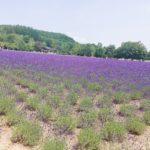 【北海道・富良野】の 【ファーム富田のラベンダーイースト】さんをご紹介します。